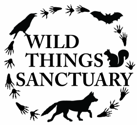 Wild Things Sanctuary