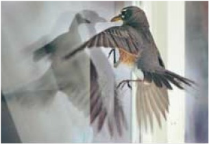 Window Collisions Wild Things Sanctuary - Window decals for birds canada