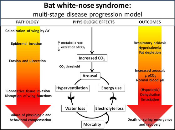 white nose syndrome in bats essay Bats have tested positive for white-nose syndrome in 22 eastern states.
